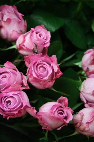 花ギフト|フラワーギフト|誕生日 花|カノシェ話題|スタンド花|ウエディングブーケ|花束|花屋|bara2-murasaki