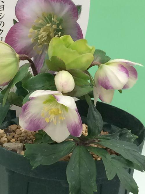 花ギフト|フラワーギフト|誕生日 花|カノシェ話題|スタンド花|ウエディングブーケ|花束|花屋|IMG_9515