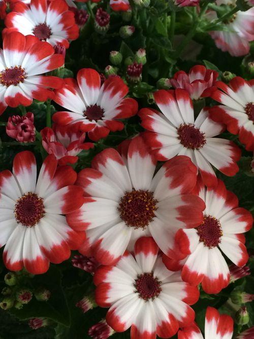 花ギフト|フラワーギフト|誕生日 花|カノシェ話題|スタンド花|ウエディングブーケ|花束|花屋|IMG_8916