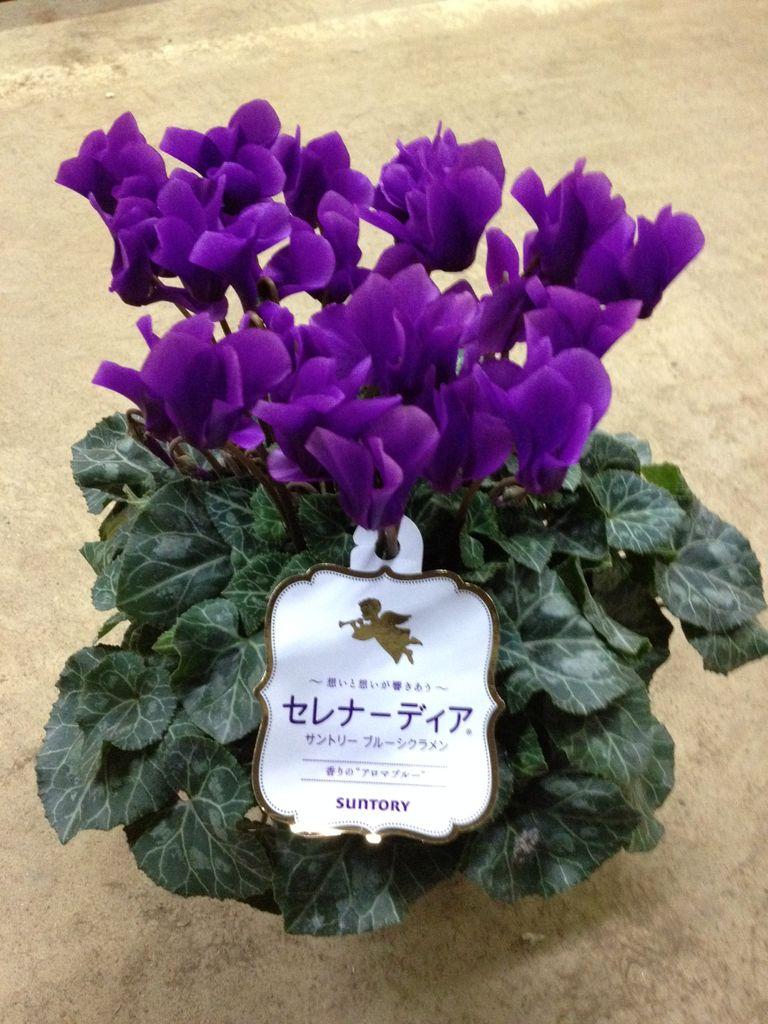 花ギフト|フラワーギフト|誕生日 花|カノシェ話題|スタンド花|ウエディングブーケ|花束|花屋|写真 1