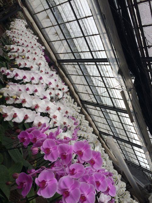 花ギフト|フラワーギフト|誕生日 花|カノシェ話題|スタンド花|ウエディングブーケ|花束|花屋|IMG_6588