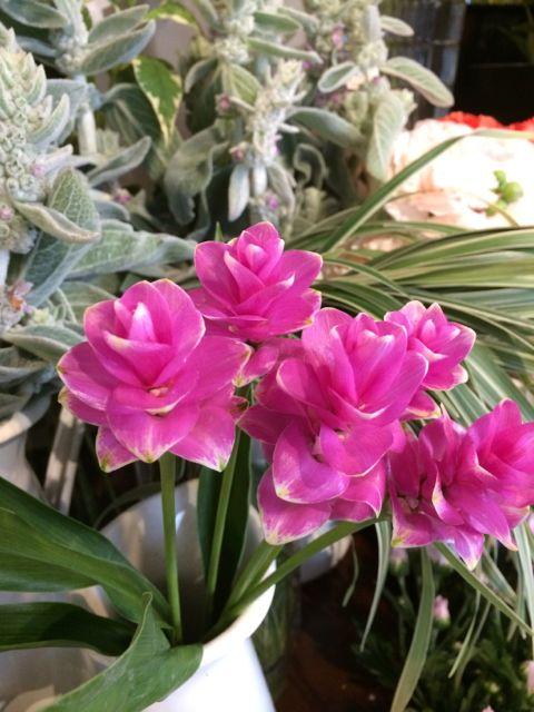 花ギフト|フラワーギフト|誕生日 花|カノシェ話題|スタンド花|ウエディングブーケ|花束|花屋|IMG_1669