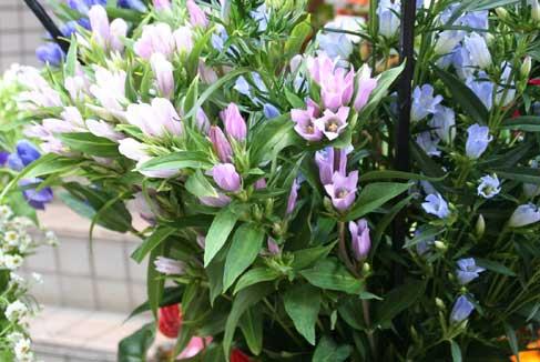 花ギフト|フラワーギフト|誕生日 花|カノシェ話題|スタンド花|ウエディングブーケ|花束|花屋|りんどう