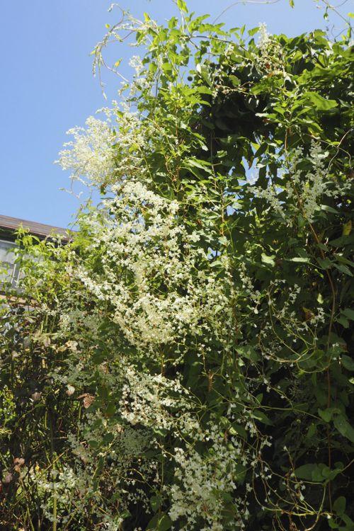 花ギフト|フラワーギフト|誕生日 花|カノシェ話題|スタンド花|ウエディングブーケ|花束|花屋|P8130085