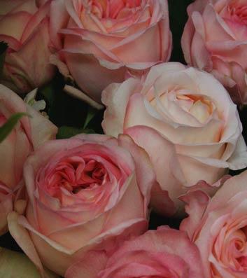 花ギフト|フラワーギフト|誕生日 花|カノシェ話題|スタンド花|ウエディングブーケ|花束|花屋|anjeri-ku