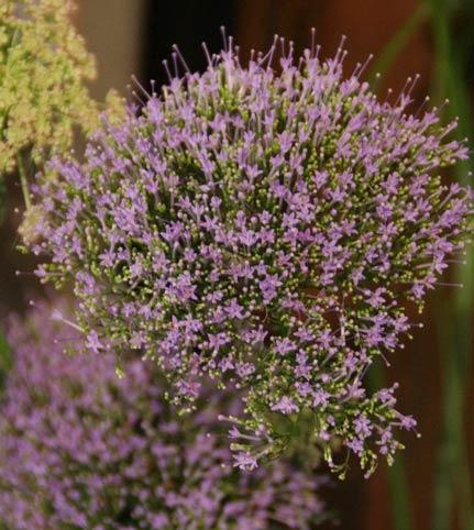 花ギフト|フラワーギフト|誕生日 花|カノシェ話題|スタンド花|ウエディングブーケ|花束|花屋|IMG_8325
