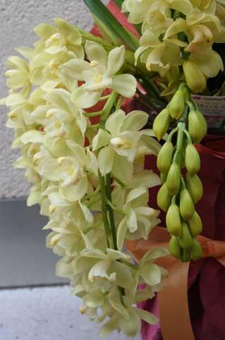 花ギフト|フラワーギフト|誕生日 花|カノシェ話題|スタンド花|ウエディングブーケ|花束|花屋|蘭2
