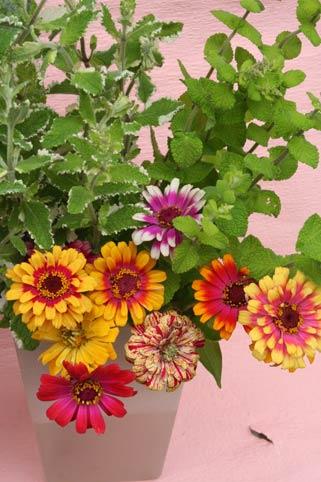 花ギフト|フラワーギフト|誕生日 花|カノシェ話題|スタンド花|ウエディングブーケ|花束|花屋|jinia1