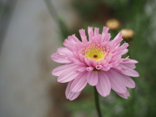 花ギフト|フラワーギフト|誕生日 花|カノシェ話題|スタンド花|ウエディングブーケ|花束|花屋|P1010203
