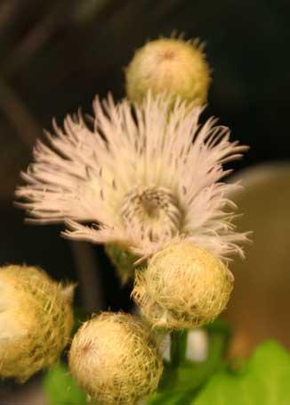 花ギフト|フラワーギフト|誕生日 花|カノシェ話題|スタンド花|ウエディングブーケ|花束|花屋|しおん2