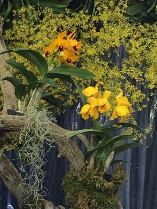 花ギフト|フラワーギフト|誕生日 花|カノシェ話題|スタンド花|ウエディングブーケ|花束|花屋|IMG_9406