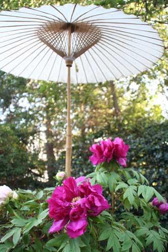 花ギフト|フラワーギフト|誕生日 花|カノシェ話題|スタンド花|ウエディングブーケ|花束|花屋|ぼたんかさ