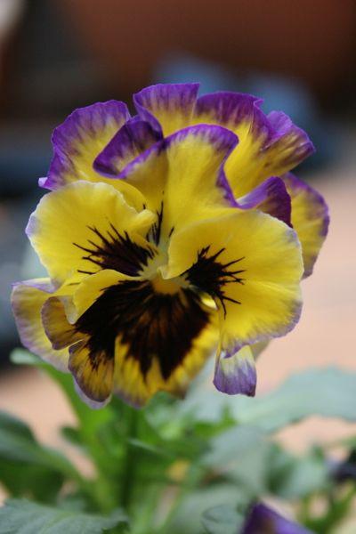 花ギフト|フラワーギフト|誕生日 花|カノシェ話題|スタンド花|ウエディングブーケ|花束|花屋|IMG_5544