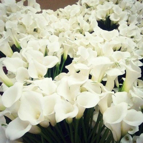 花ギフト|フラワーギフト|誕生日 花|カノシェ話題|スタンド花|ウエディングブーケ|花束|花屋|11421460_443255792502896_540818188_n