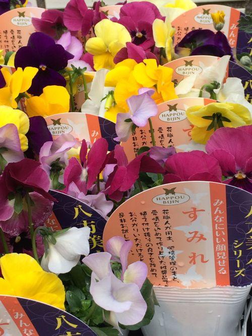 花ギフト|フラワーギフト|誕生日 花|カノシェ話題|スタンド花|ウエディングブーケ|花束|花屋|IMG_8911