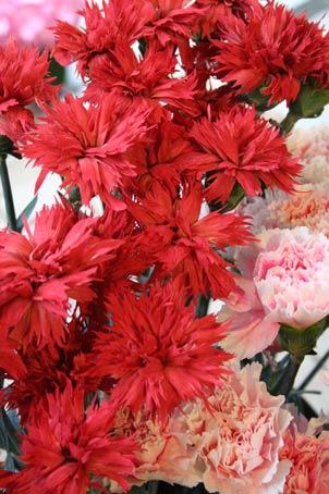 花ギフト|フラワーギフト|誕生日 花|カノシェ話題|スタンド花|ウエディングブーケ|花束|花屋|gizaka-ne
