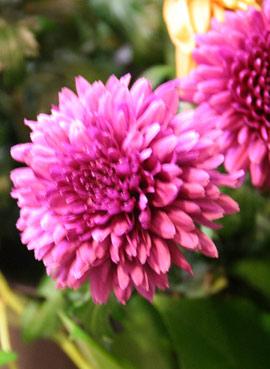 花ギフト フラワーギフト 誕生日 花 カノシェ話題 スタンド花 ウエディングブーケ 花束 花屋 IMG_0118