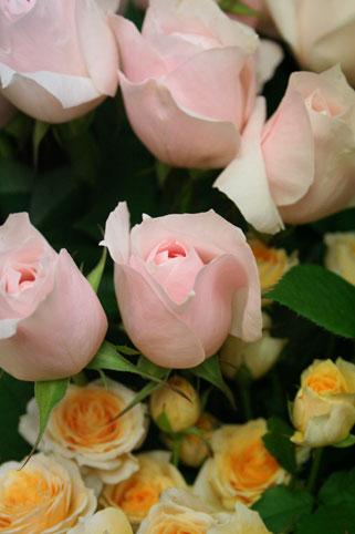花ギフト|フラワーギフト|誕生日 花|カノシェ話題|スタンド花|ウエディングブーケ|花束|花屋|yuka
