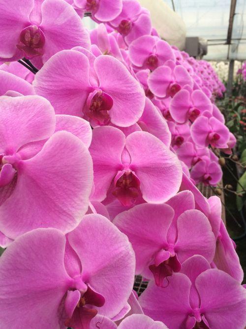 花ギフト|フラワーギフト|誕生日 花|カノシェ話題|スタンド花|ウエディングブーケ|花束|花屋|IMG_6573