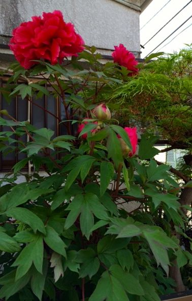 花ギフト|フラワーギフト|誕生日 花|カノシェ話題|スタンド花|ウエディングブーケ|花束|花屋|写真 3(26)