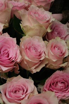 花ギフト|フラワーギフト|誕生日 花|カノシェ話題|スタンド花|ウエディングブーケ|花束|花屋|rimenburansu