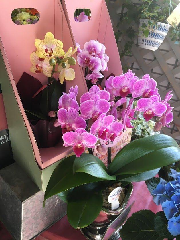 花ギフト|フラワーギフト|誕生日 花|カノシェ話題|スタンド花|ウエディングブーケ|花束|花屋|IMG_1591