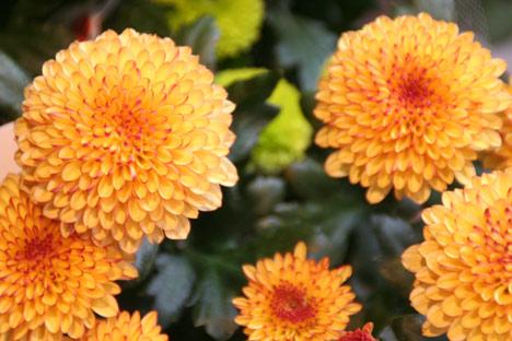 花ギフト|フラワーギフト|誕生日 花|カノシェ話題|スタンド花|ウエディングブーケ|花束|花屋|マム