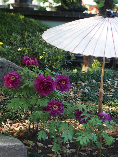 花ギフト|フラワーギフト|誕生日 花|カノシェ話題|スタンド花|ウエディングブーケ|花束|花屋|P1010710