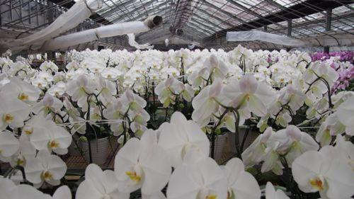 花ギフト|フラワーギフト|誕生日 花|カノシェ話題|スタンド花|ウエディングブーケ|花束|花屋|P1010983