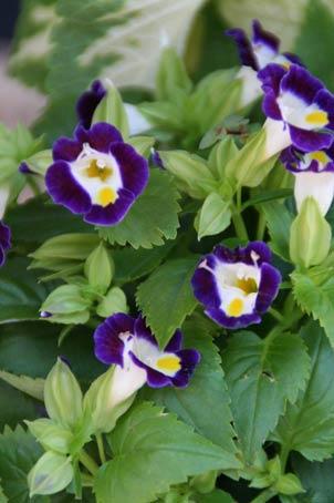 花ギフト|フラワーギフト|誕生日 花|カノシェ話題|スタンド花|ウエディングブーケ|花束|花屋|IMG_8338