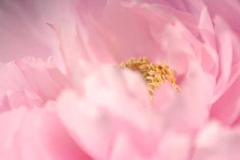 花ギフト|フラワーギフト|誕生日 花|カノシェ話題|スタンド花|ウエディングブーケ|花束|花屋|ボタンアップ