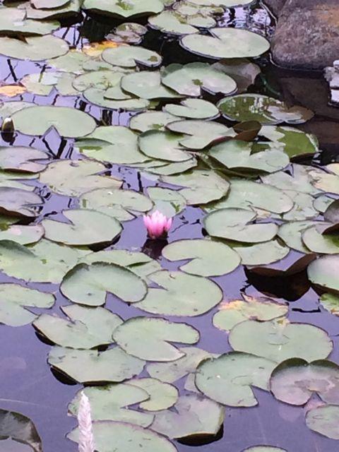 花ギフト|フラワーギフト|誕生日 花|カノシェ話題|スタンド花|ウエディングブーケ|花束|花屋|IMG_1472