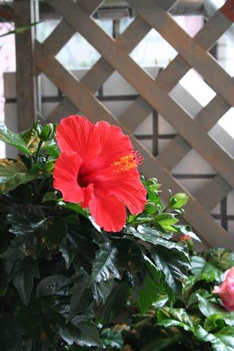 花ギフト|フラワーギフト|誕生日 花|カノシェ話題|スタンド花|ウエディングブーケ|花束|花屋|akahaibi
