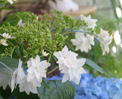 花ギフト|フラワーギフト|誕生日 花|カノシェ話題|スタンド花|ウエディングブーケ|花束|花屋|墨田の花火