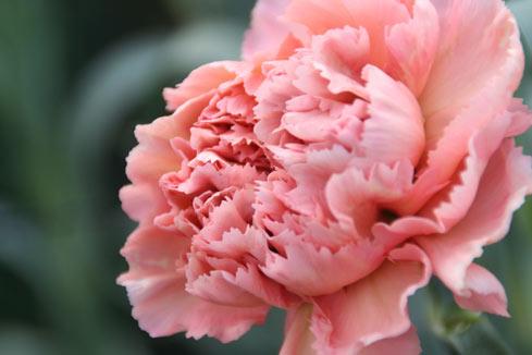 花ギフト|フラワーギフト|誕生日 花|カノシェ話題|スタンド花|ウエディングブーケ|花束|花屋|カーネシック