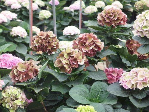 花ギフト|フラワーギフト|誕生日 花|カノシェ話題|スタンド花|ウエディングブーケ|花束|花屋|P6080096