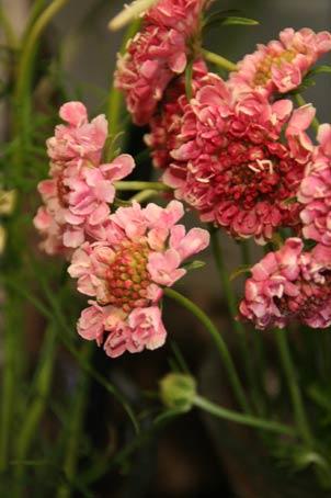 花ギフト|フラワーギフト|誕生日 花|カノシェ話題|スタンド花|ウエディングブーケ|花束|花屋|IMG_9476