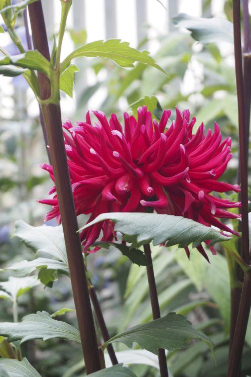 花ギフト|フラワーギフト|誕生日 花|カノシェ話題|スタンド花|ウエディングブーケ|花束|花屋|P8130169