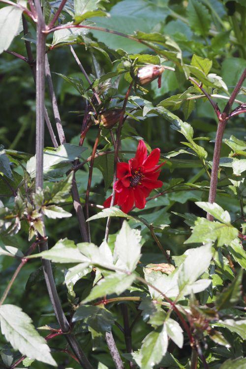 花ギフト|フラワーギフト|誕生日 花|カノシェ話題|スタンド花|ウエディングブーケ|花束|花屋|P8130132
