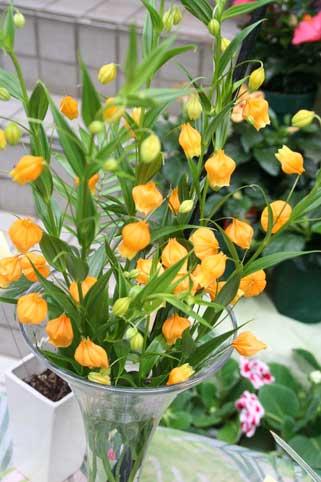 花ギフト|フラワーギフト|誕生日 花|カノシェ話題|スタンド花|ウエディングブーケ|花束|花屋|サンダーソニア