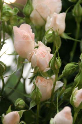 花ギフト|フラワーギフト|誕生日 花|カノシェ話題|スタンド花|ウエディングブーケ|花束|花屋|ハッピー
