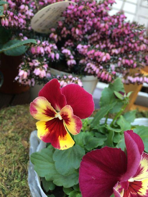 花ギフト フラワーギフト 誕生日 花 カノシェ話題 スタンド花 ウエディングブーケ 花束 花屋 IMG_9043