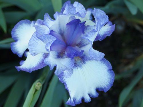 花ギフト|フラワーギフト|誕生日 花|カノシェ話題|スタンド花|ウエディングブーケ|花束|花屋|アイリス