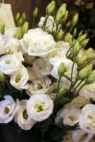 花ギフト|フラワーギフト|誕生日 花|カノシェ話題|スタンド花|ウエディングブーケ|花束|花屋|トルコ白