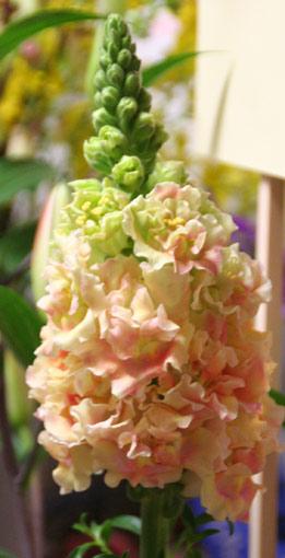 花ギフト|フラワーギフト|誕生日 花|カノシェ話題|スタンド花|ウエディングブーケ|花束|花屋|IMG_1243