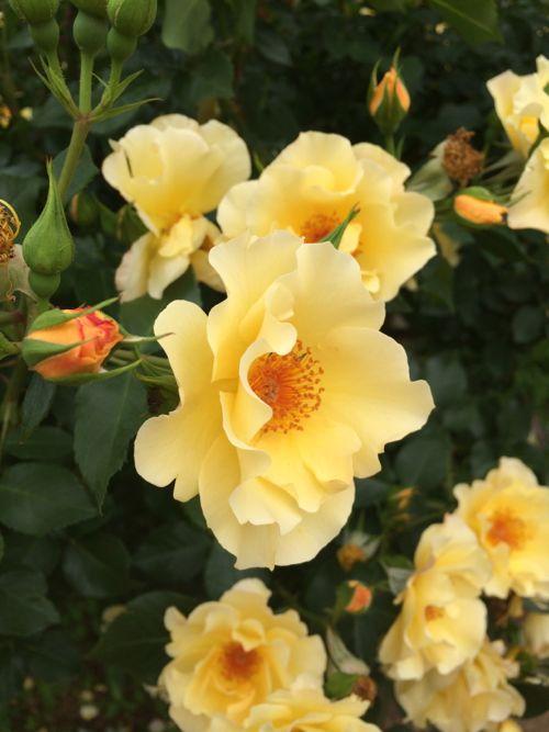 花ギフト|フラワーギフト|誕生日 花|カノシェ話題|スタンド花|ウエディングブーケ|花束|花屋|IMG_5201