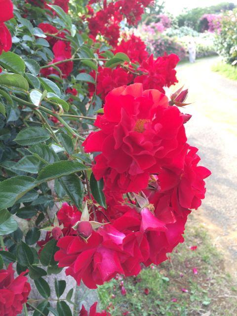 花ギフト|フラワーギフト|誕生日 花|カノシェ話題|スタンド花|ウエディングブーケ|花束|花屋|IMG_1489