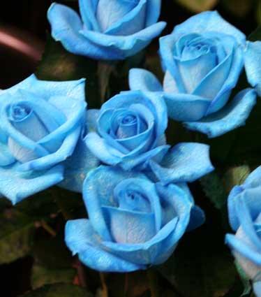 花ギフト|フラワーギフト|誕生日 花|カノシェ話題|スタンド花|ウエディングブーケ|花束|花屋|ベンデラ