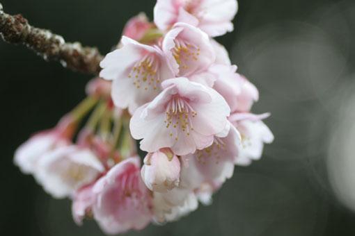 花ギフト|フラワーギフト|誕生日 花|カノシェ話題|スタンド花|ウエディングブーケ|花束|花屋|sakuwa
