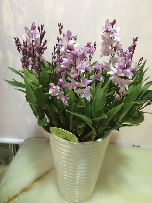 花ギフト|フラワーギフト|誕生日 花|カノシェ話題|スタンド花|ウエディングブーケ|花束|花屋|IMG_9612